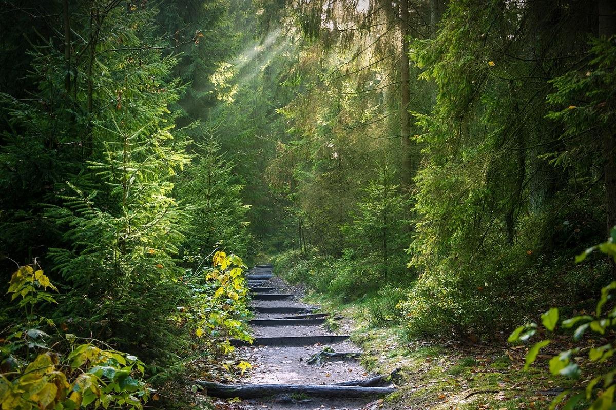 sendas-caminos-bosque-turismo