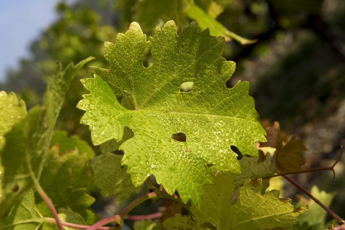 vino-de-navarra-Paisaje-viña