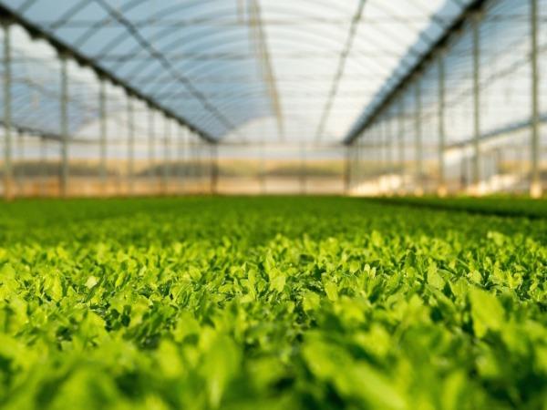 Cadreita acoge 20 hectáreas dedicadas a la investigación y desarrollo de primeros brotes.