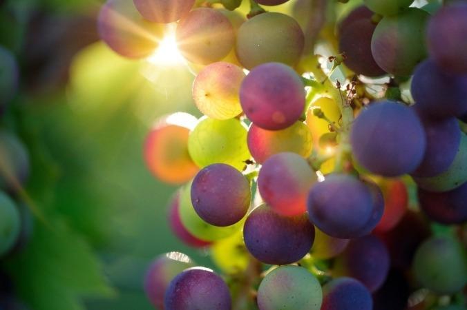 Detalle de un viñedo