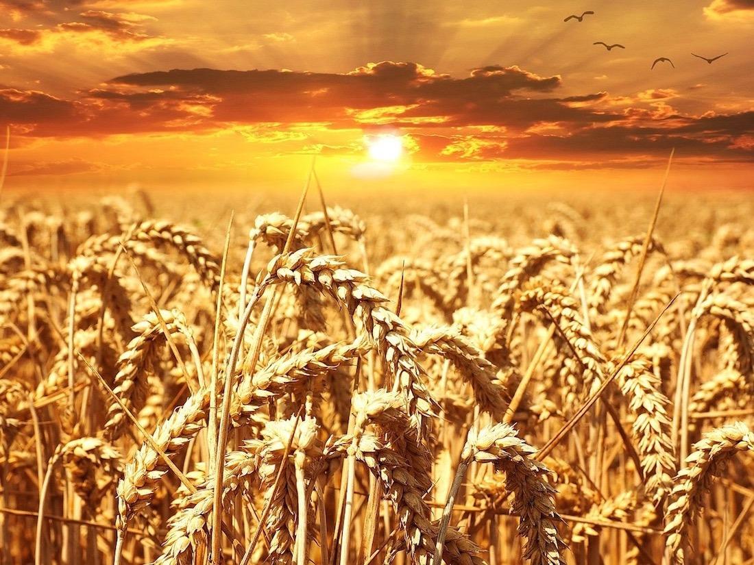 Campo-Trigo-Sunset-Sol
