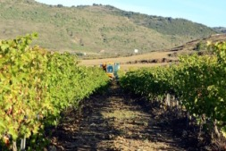 La Unión de Agricultores y Ganaderos de Navarra es una organización profesional agraria plural e independiente cuyo principal objetivo es representar y defender los intereses del mundo rural navarro.