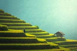 Paisaje rural en Asia, una de las imágenes de StudioAhedo que se pueden ver en la exposición.