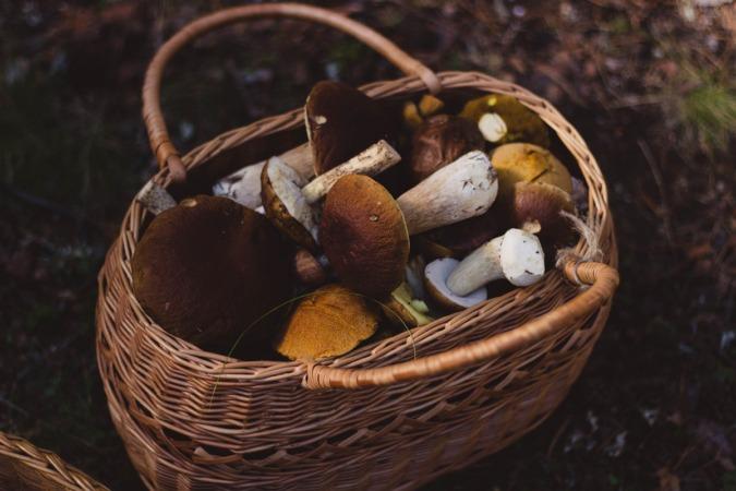 setas-cesta-otoño
