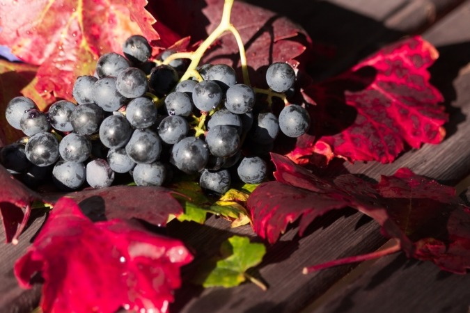 wine-1729460_1920