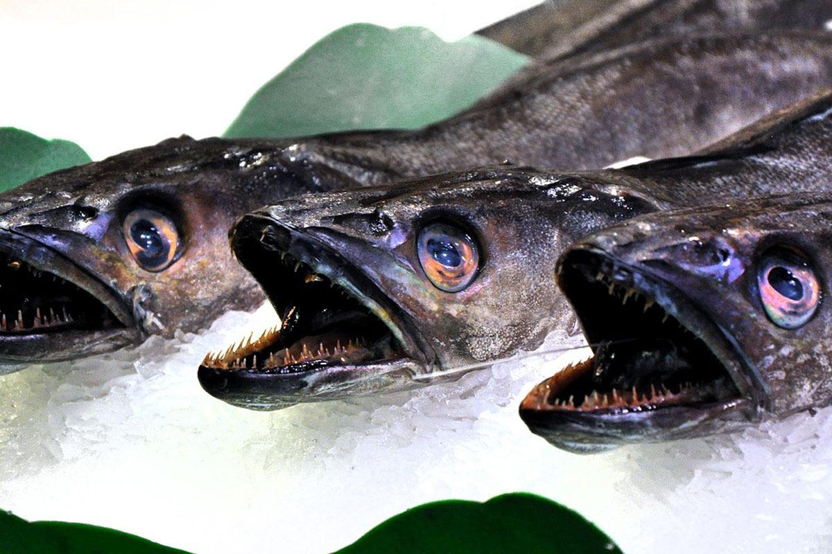 El pescado, y en concreto la merluza, es uno de los grandes protagonistas de la gastronomía en Navidad.