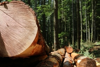 MADERA bosques foto Maderea (7)