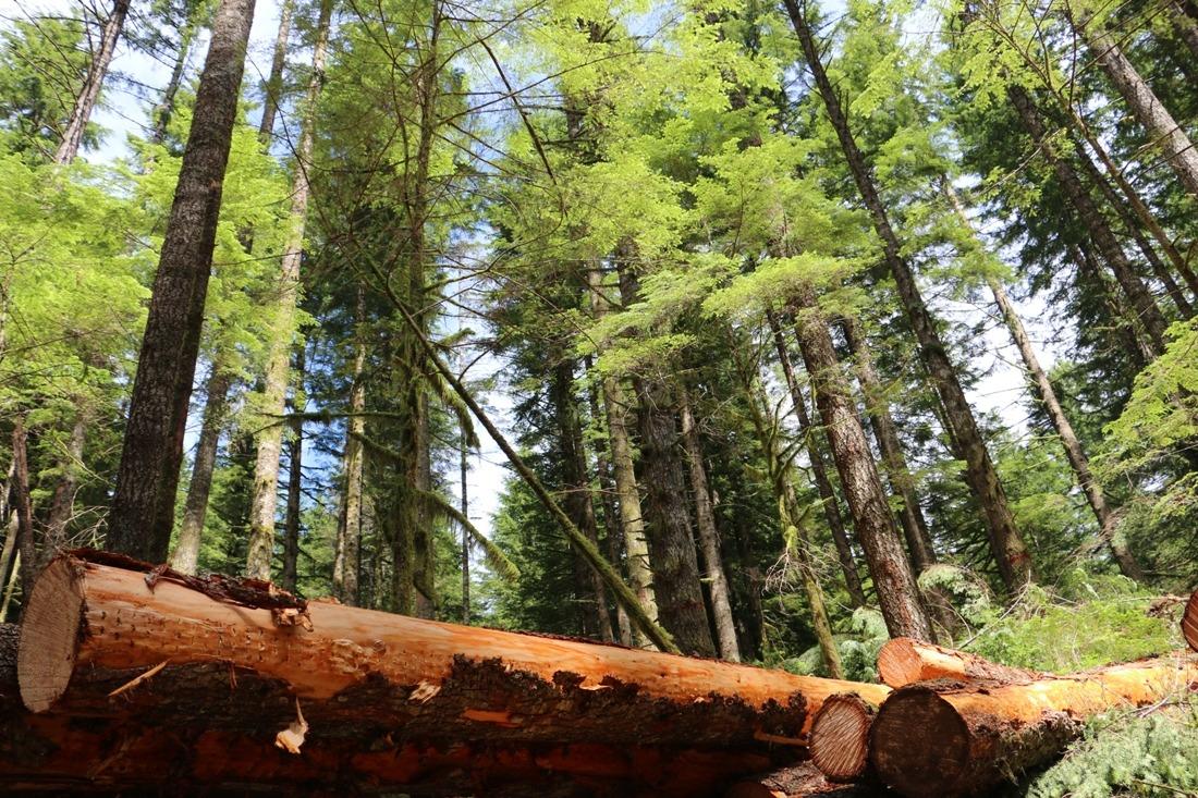 El de la madera es un sector muy importante actuando como motor económico, genera empleo, garantiza el cuidado del monte y previene incendios y plagas. FOTO: Maderea