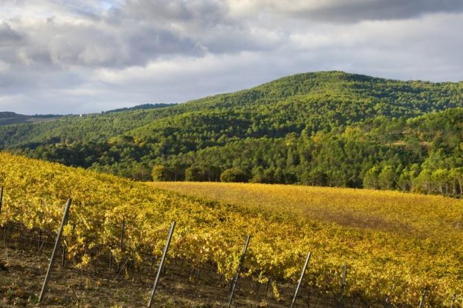 Durante la pasada campaña se recogieron 78 millones de kilos de uva en Navarra.
