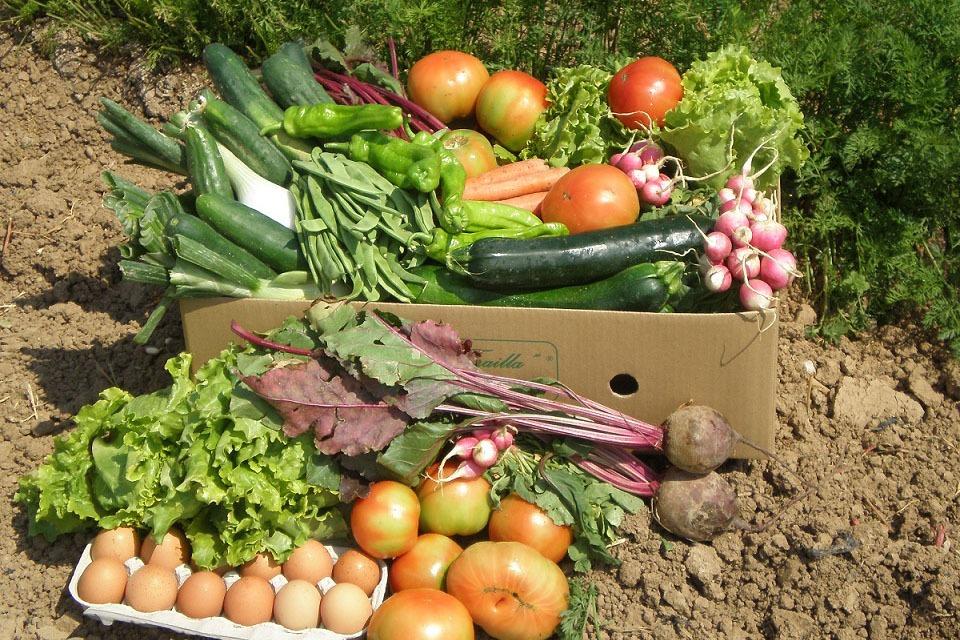 Surtido de productos de cultivo ecológico.
