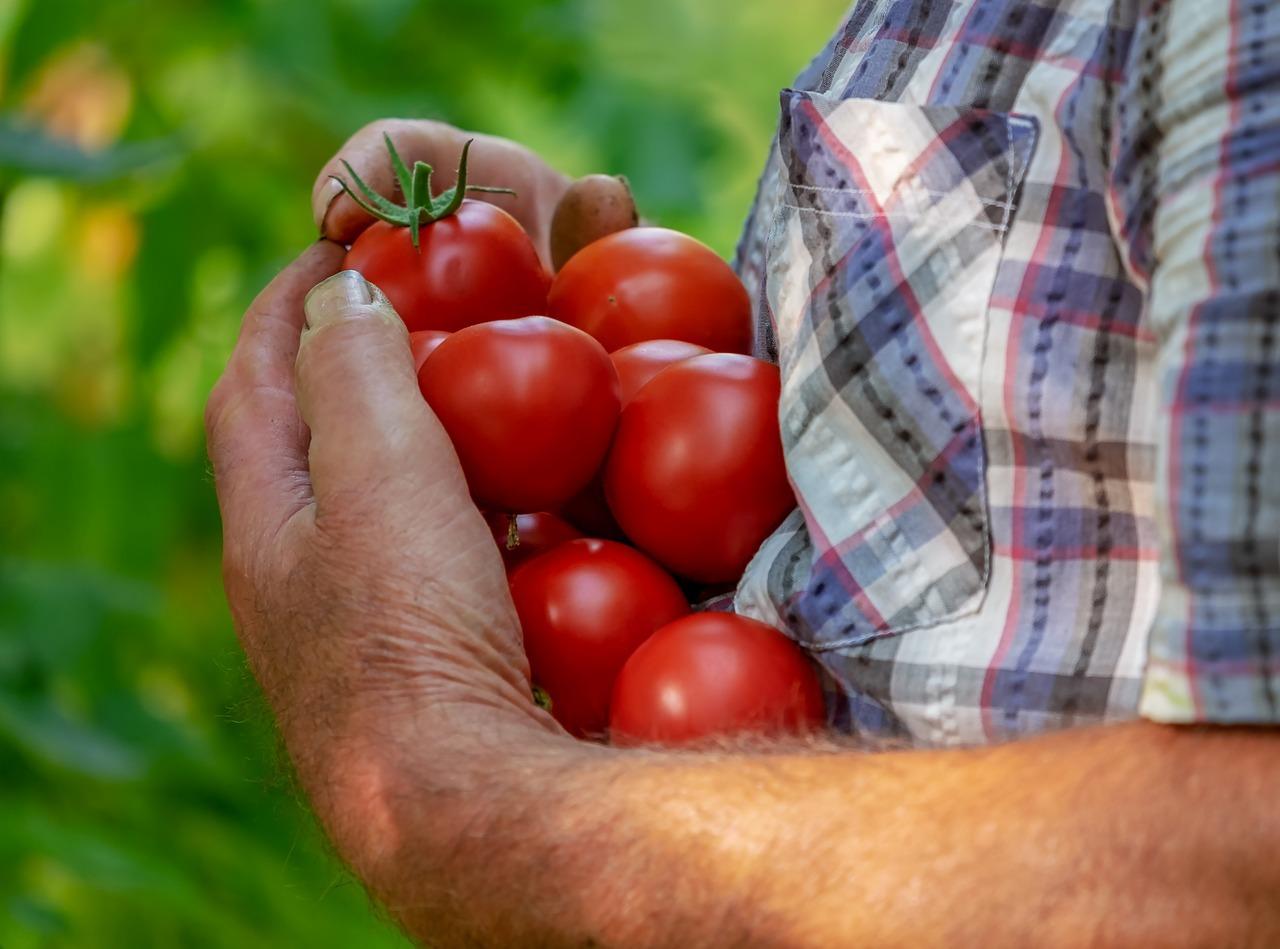 El sector agroalimentario se encuentra sometido a una importante regulación normativa.