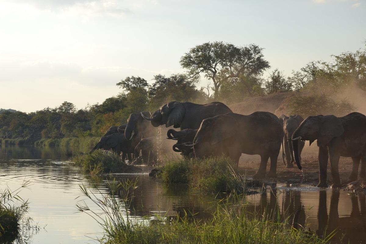 sudafrica-turismo-parque-kruger