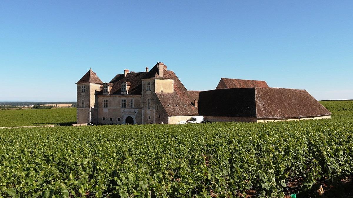 vino-chateau-viñedo-borgoña-turismo