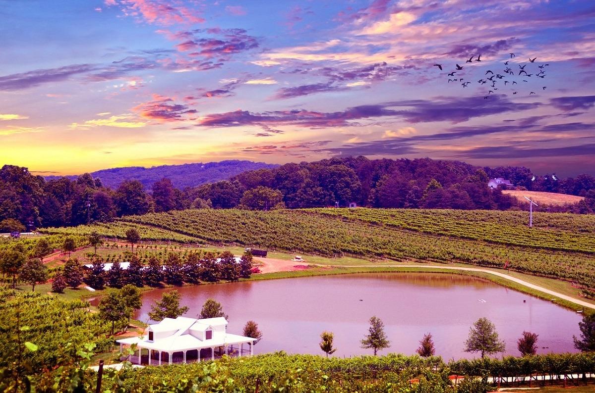 En el Valle de Napa (California) los viñedos son los protagonistas del paisaje.