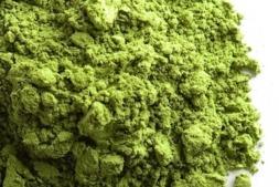 Una de las algas utilizadas en el proyecto Biosea para obtener proteína.