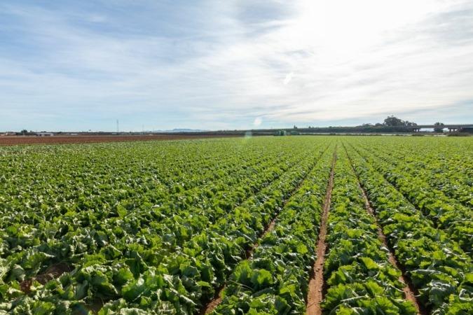 Campos de cultivo cercanos a la nueva planta de Vegetales Línea Verde en Torre-Pacheco (Murcia).
