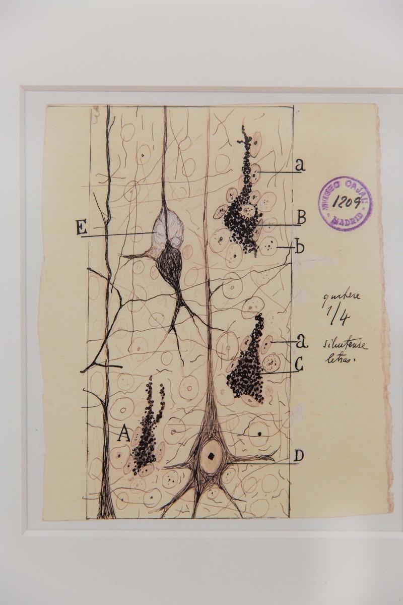 expo-arte-ciencia-Ramon-Cajal