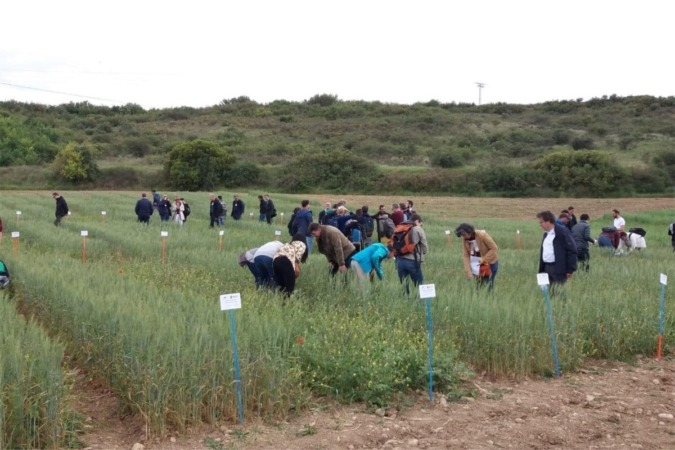 Los participantes en las sesiones científicas durante la visita a la finca experimental de INTIA en Mendigorría.