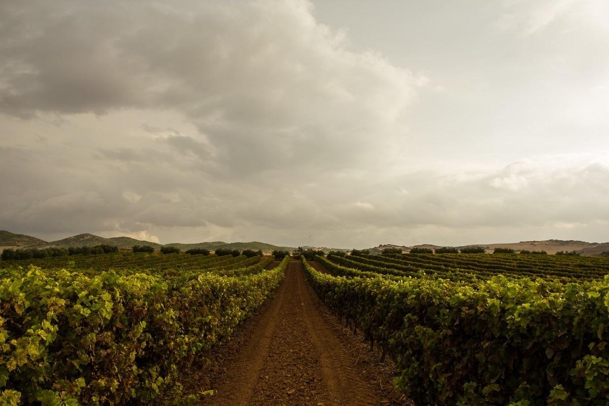 turismo-navarra-templarios-viñas-foto-JR-Casals