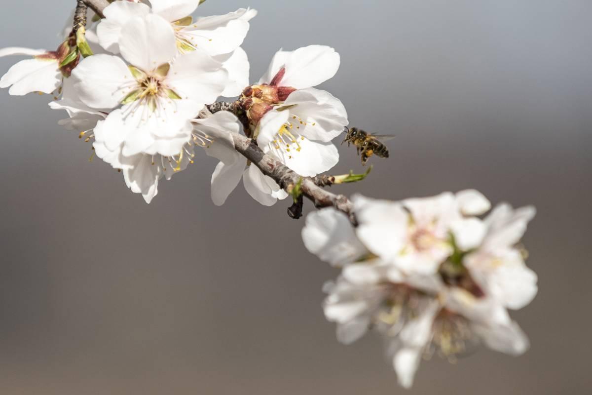 Los representantes de Bee Standards defienden la importancia de las abejas para el medio ambiente.