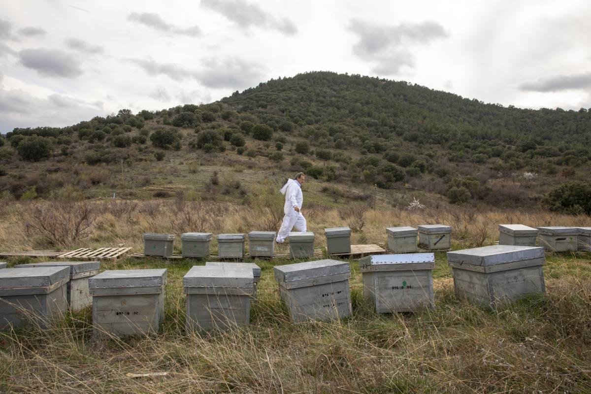 Las colmenas de José Luis Guillén se encuentran en los montes de Cariñena, en tierras aragonesas.