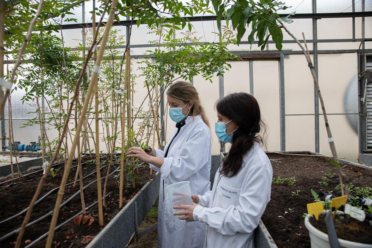 Arriezu confía en plantar más de 2.000 hectáreas para el año 2024.