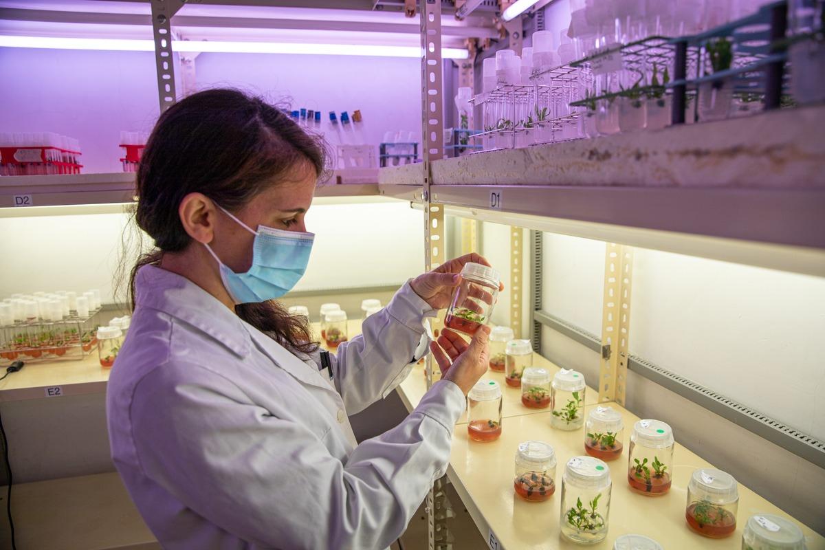 El propietario de Arriezu Vineyards compró los invernaderos y laboratorios de Opposa para el proyecto.