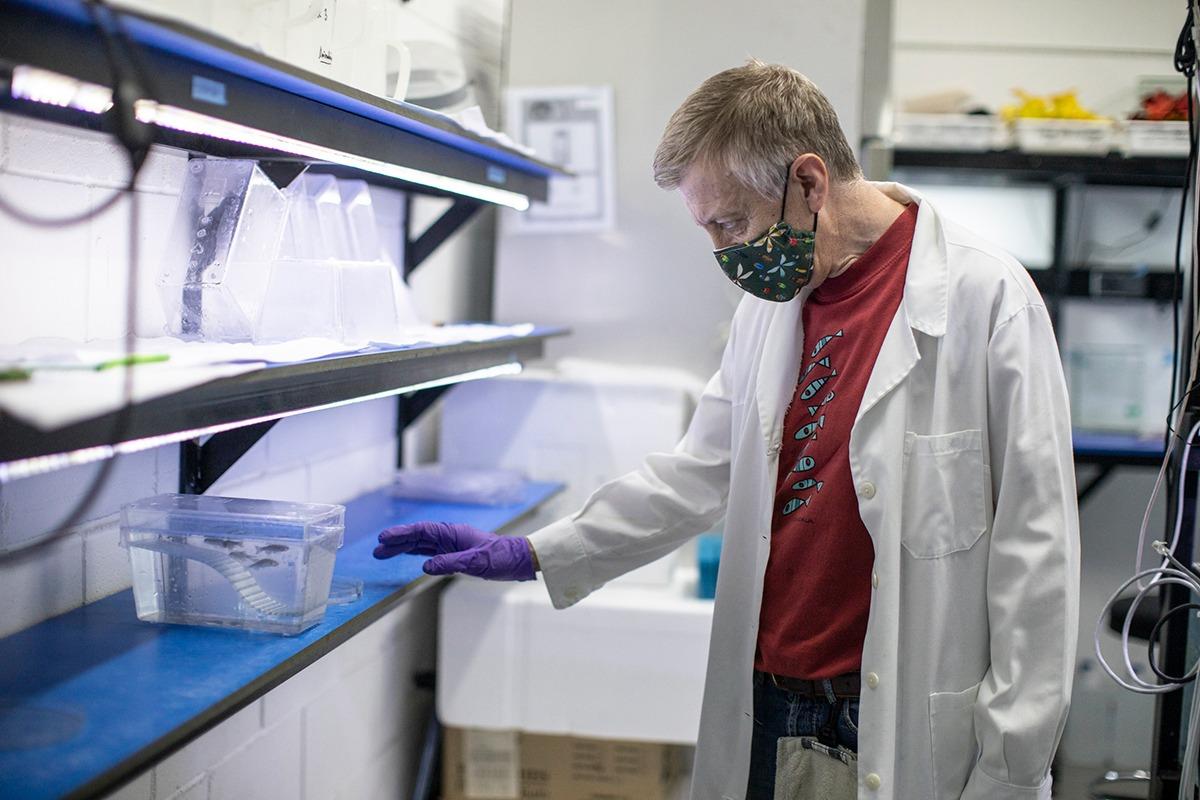 Los peces cebra también van a poder utilizarse para testar medicamentos de las empresas farmacéuticas.