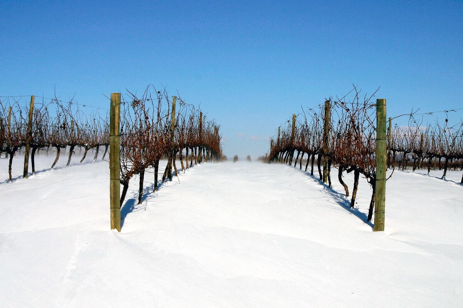 Los suelos donde germinan sus viñas también son excepcionales y terminan de redondear los beneficios del clima.